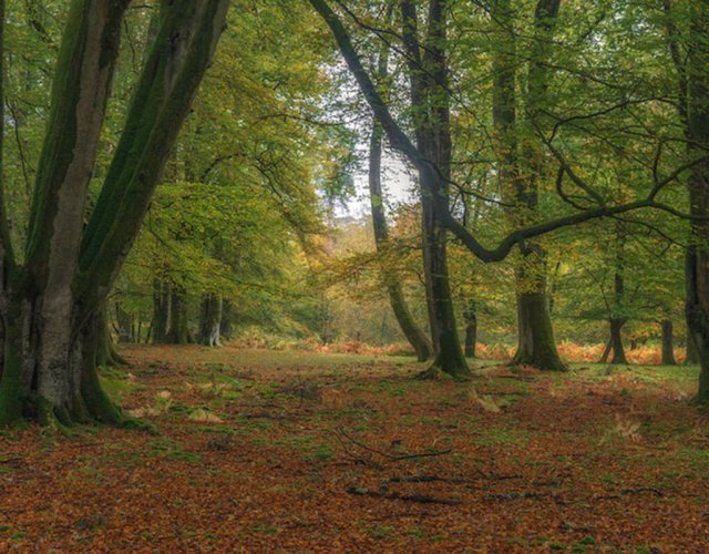 New Forest Escapes - Forest Oaks - Brockenhurst - New Forest Escapes