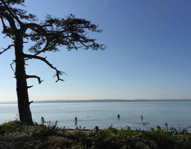 New Forest Escapes -