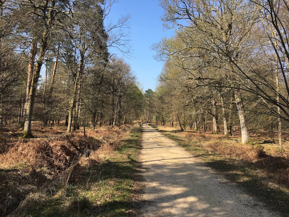 New Forest National Park Walks and Cycling