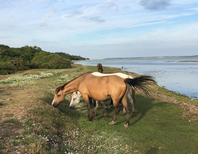 New Forest Ponies at Tanners Lane