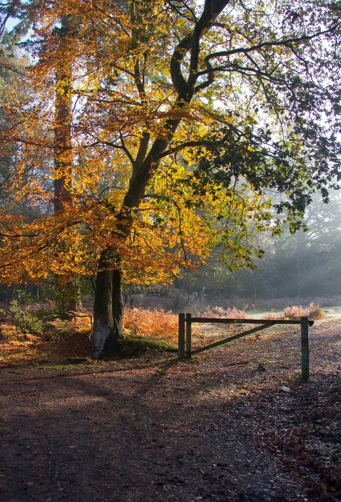 Classic New Forest Walks - Enjoy getting lost at Round Hill